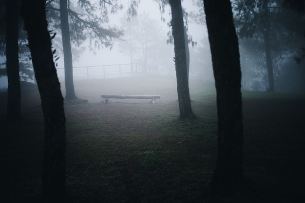 Nebel im kiefernwald