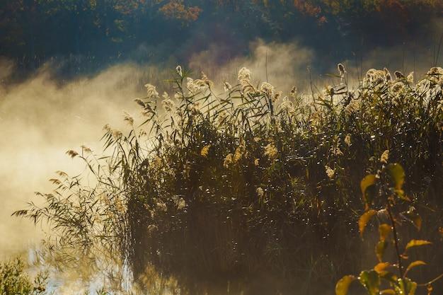 Nebel mit sonnenlicht am frostigen morgen auf dem fluss