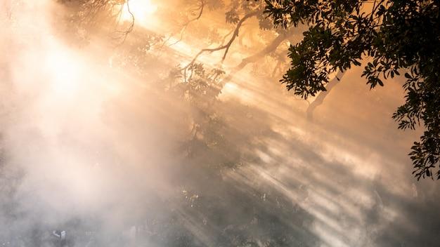 Nebel oder rauch hintergrund. smog abstrakten hintergrund