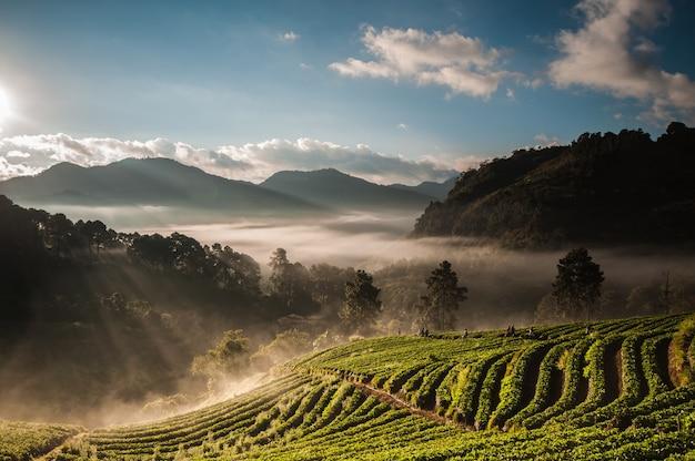Nebel über dem tal des berges bei der sonne, die eine schöne farbe auf dem gebiet gebend steigt