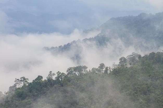 Nebel und wolke mountain valley landschaft