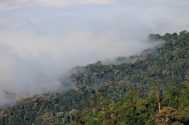 Nebel- und wolkengebirgstalandschaft