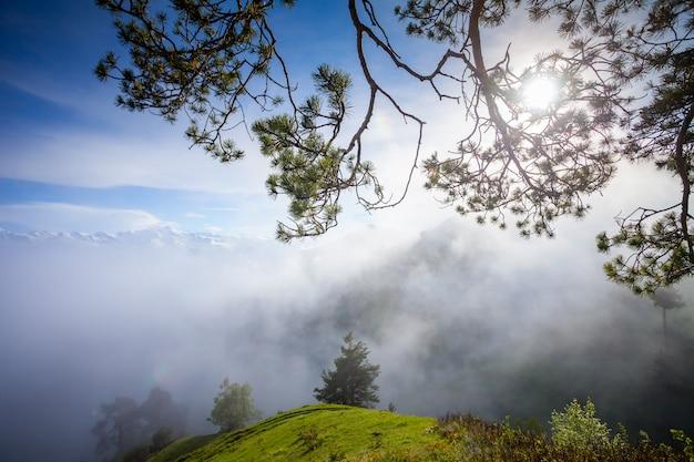 Nebelhafte gebirgssommerlandschaft mit kiefer