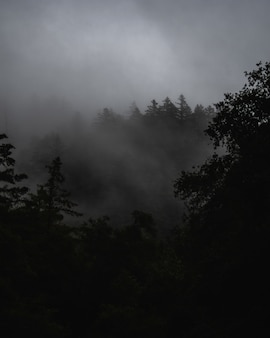 Nebelhafte landschaft mit einem mit nebel bedeckten wald unter dunklen gewitterwolken
