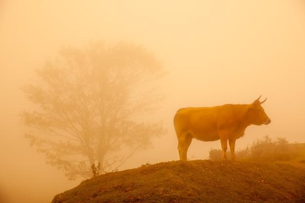 Nebelhafte landschaft mit wilden kühen im grünen gras eines berges