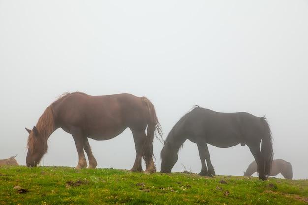 Nebelhafte landschaft mit wilden pferden im grünen gras eines berges