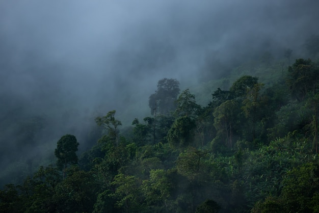 Nebelhafte wolken bedecken berge in thailand.