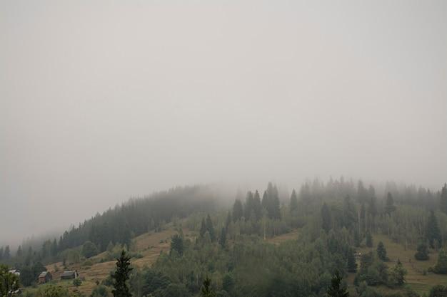 Nebelhafter wald auf einem bergabhang in einem naturreservat. berg im nebel.