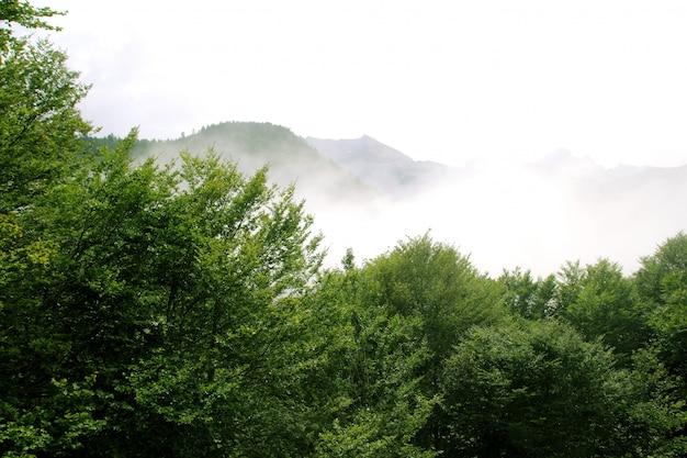 Nebelige gebirgswaldnebel scenics natur