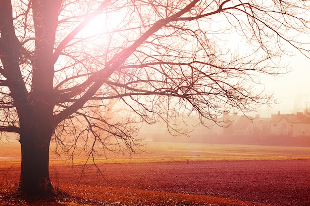 Nebelige landschaft am herbstmorgen