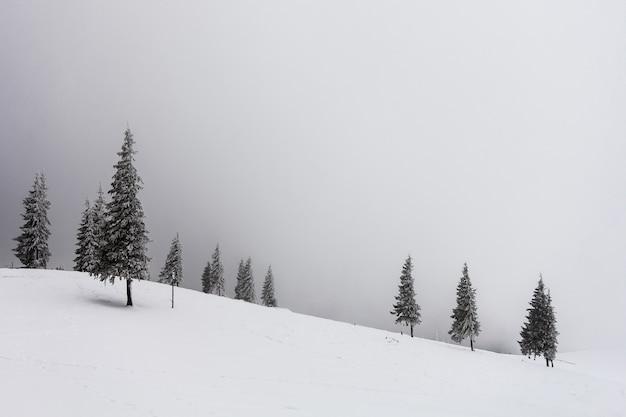 Nebelige landschaft des winters mit schnee bedeckte kiefer