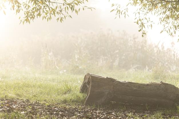 Nebeliger herbstmorgen im wald, ein baumstamm im gras.
