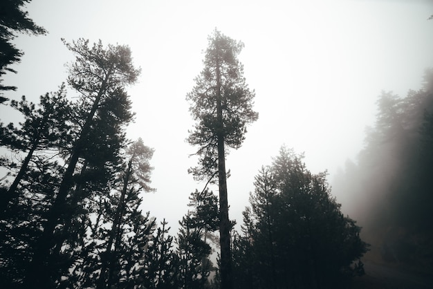 Nebeliger morgen ein wald mit vielen bäumen