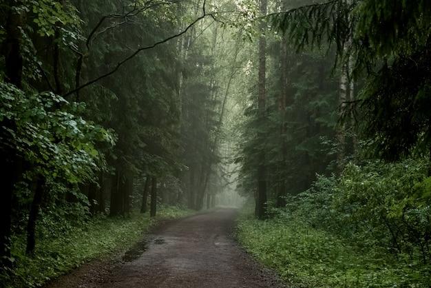 Nebeliger schotterweg durch nadelwald, mystische landschaft