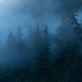 Nebeliger wald, regionaler bezirk skeena-königin charlotte, haida gwaii, graham island, britisch-columbia