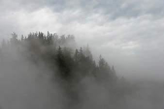 Nebeln Sie über Bäume in einem Wald, Fall-Stadt, Snoqualmie, Washington State, USA ein