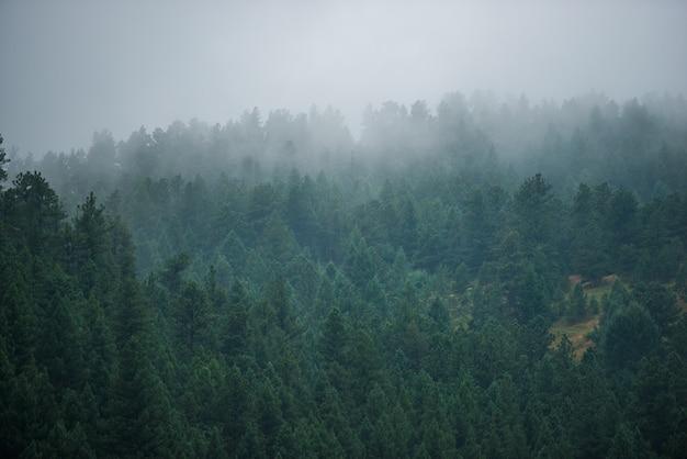 Nebelwälder hügel