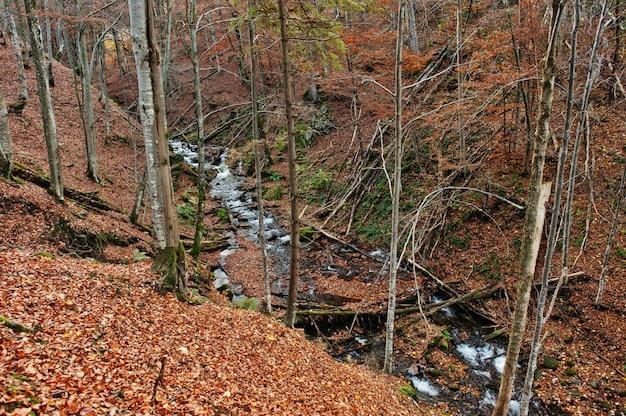 Nebenfluss fließt im wald vom hintergrundsonnenlicht und vom herbstwald der spitze unten. gebirgsfluss