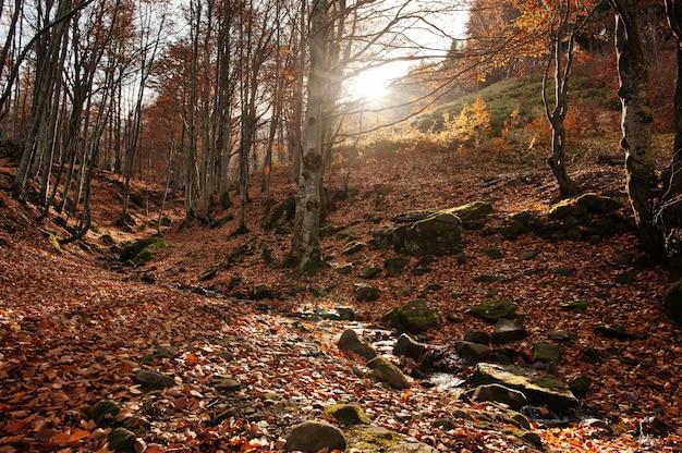 Nebenfluss fließt im wald vom hintergrundsonnenlicht und vom herbstwald der spitze unten.