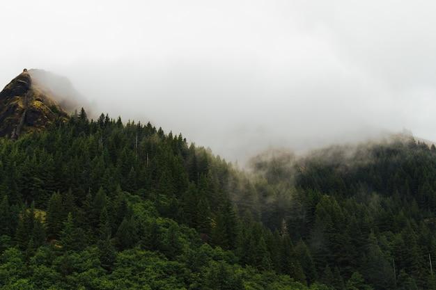 Neblige landschaft eines waldes mit rauch, der aus den bäumen kommt