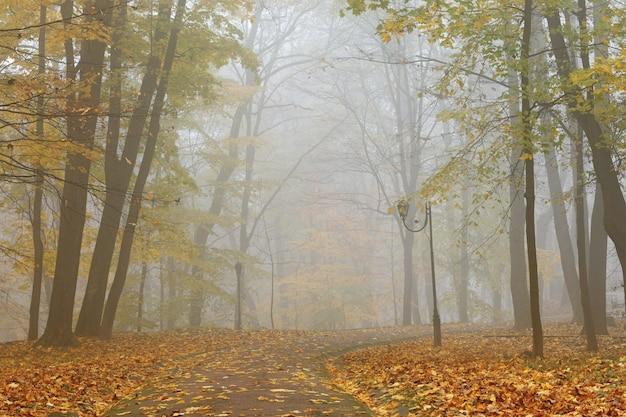Nebliger morgen in der schönen landschaft des herbstparks