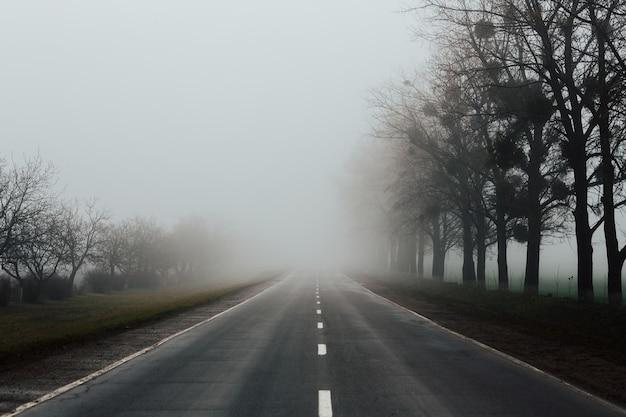 Nebliger nebliger frühlingsmorgen auf der straße mit bäumen am rande.