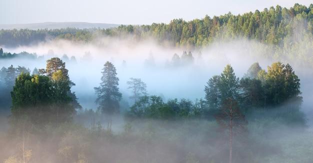 Nebliger sonnenaufgang in einem nationalpark im ural