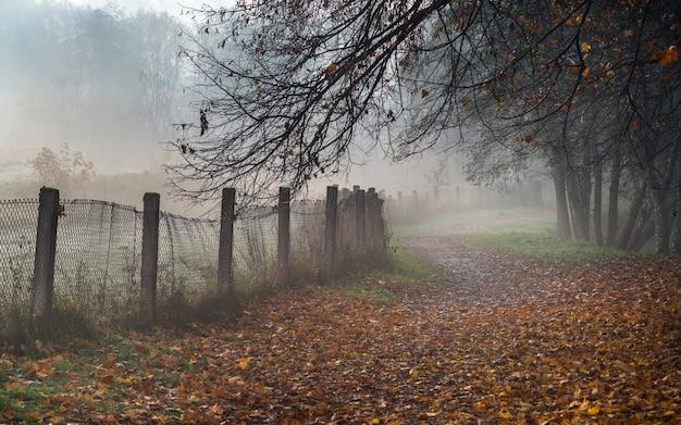 Nebliger weg im park am frühen nebligen herbstmorgen.