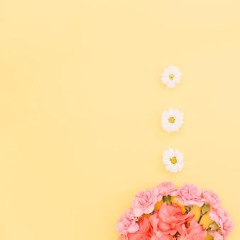 Nelken und gänseblümchen