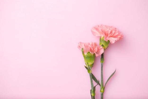 Nelkenblumen auf süßem rosa hintergrund, muttertagskonzept