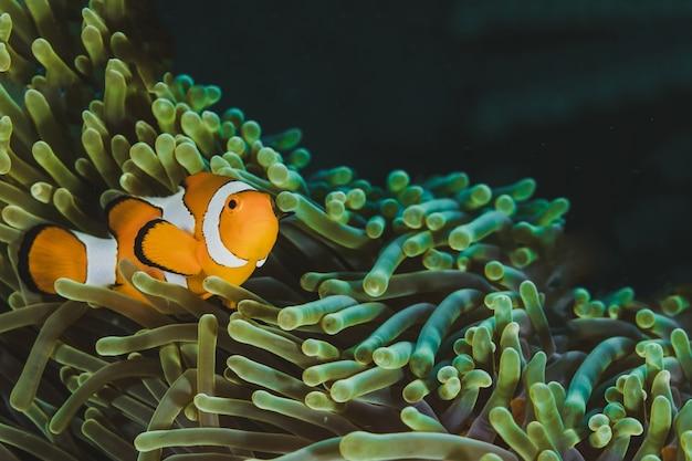 Nemo mit copyspace mit anemone finden