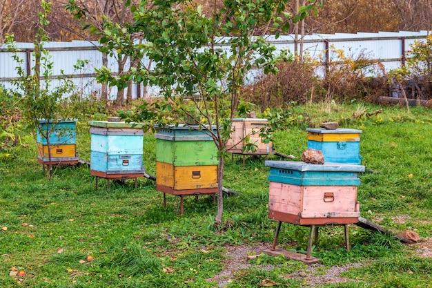 Nesselsucht im bienenhaus. abschluss der sommersaison der honigsammlung und herbstvorbereitung für den winterschlaf der insekten.