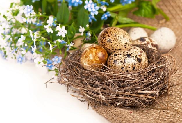 Nest mit eiern und vergissmeinnicht auf einem tuch auf einer weißen oberfläche
