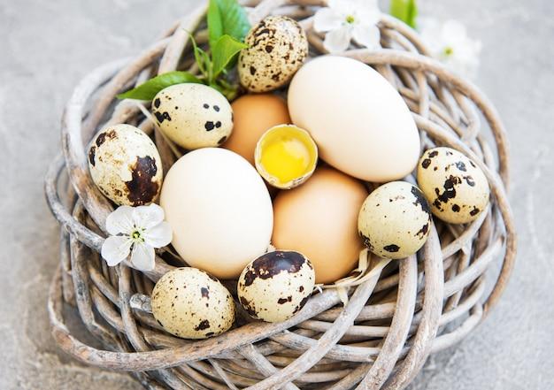 Nest mit hühner- und wachteleiern