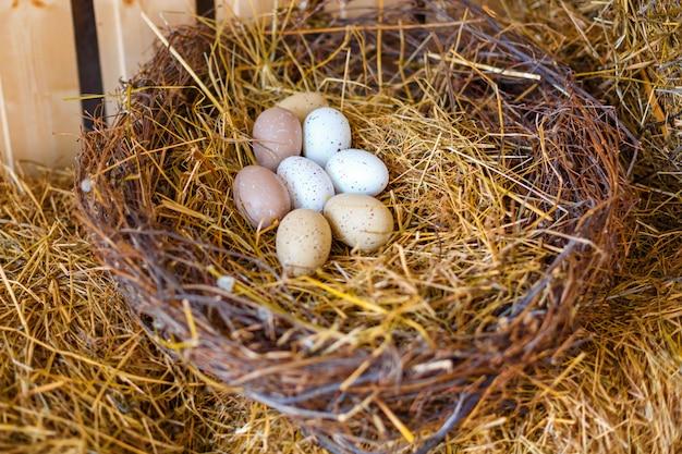 Nest mit hühnereiern