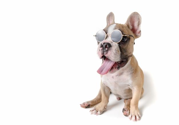 Nette abnutzungssonnenbrille der französischen bulldogge lokalisiert