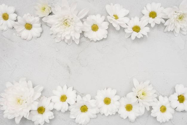 Nette anordnung der weißen gänseblümchenblumen