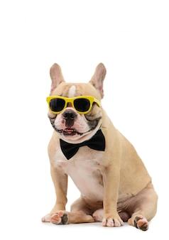 Nette braune französische bulldogge tragen sonnenbrille und schwarze fliege, die isoliert sitzt