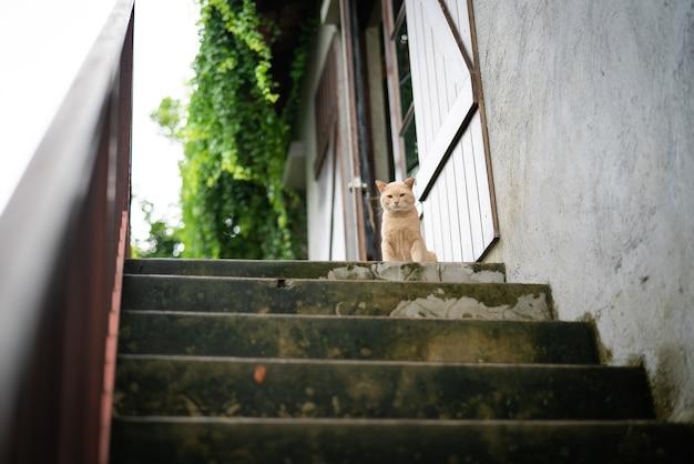 Nette braune katze saß auf wartender mahlzeit des oberen treppenschritts vom inhaber