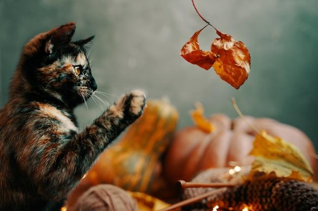 Nette bunte katze, die mit einem trockenen herbstblatt spielt