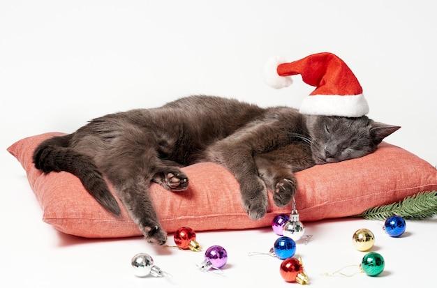 Nette flauschige katze mit einer weihnachtsmütze und weihnachtsdekorationen