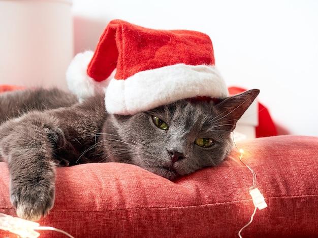 Nette flauschige katze mit einer weihnachtsmütze
