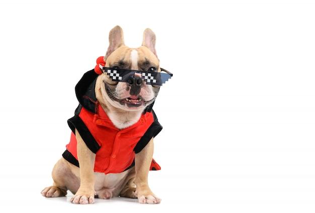 Nette französische bulldogge tragen eine schicke brille und sitzen isoliert auf weiß