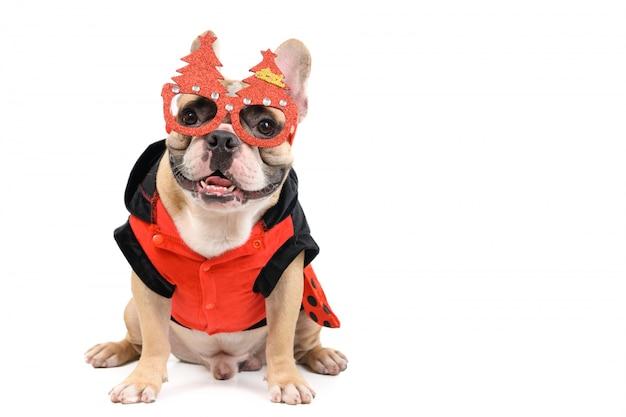 Nette französische bulldogge tragen weihnachtsbrille und sitzen isoliert