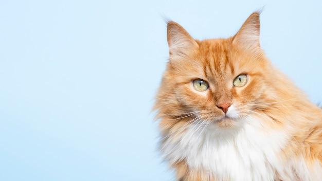 Nette freundliche katze, die kamera betrachtet