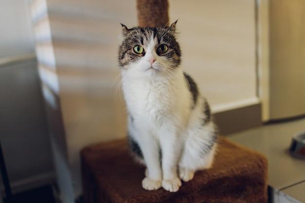 Nette getigerte katze, die auf rustikalem holzstuhl sitzt, der auf retro in haus entspannt.