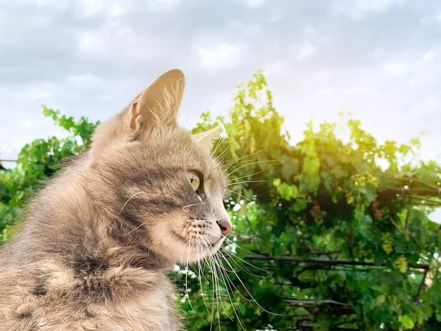 Nette graue katze auf einem hintergrund des blauen himmels