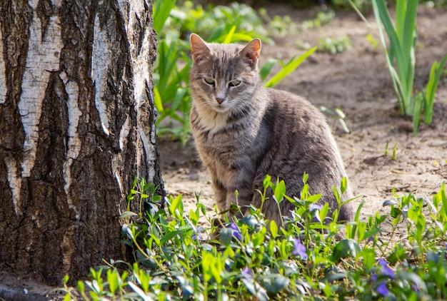 Nette graue katze, die warmes sonniges wetter in einem frühlingsgarten genießt, der nahe dem baum sitzt.