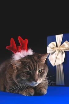 Nette graue katze mit rotwildgeweih auf dunklem hintergrund weihnachten und neujahrskonzept mit haustieren und blauer geschenkbox