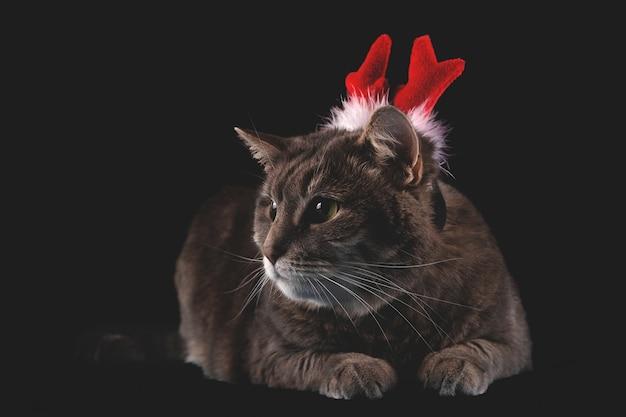 Nette graue katze mit rotwildgeweih auf dunklem hintergrund weihnachten und neujahrskonzept mit haustieren